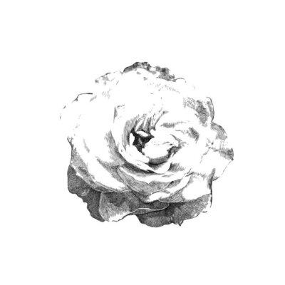 Sticker gezeichnet Rose