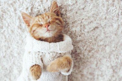 Sticker Gigner kitten