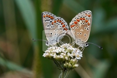 glücklich Schmetterlinge