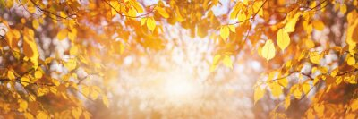 Sticker Golden brown tree leaves and autumn a bright sunny yellow sky background at sunrise.