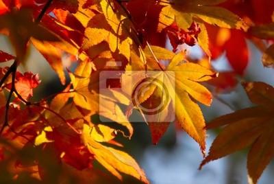 Sticker Goldene Herbstblätter