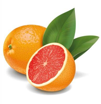 Sticker Grapefruit Illustration