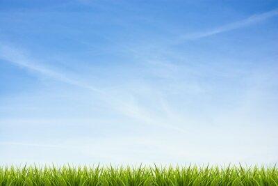 Sticker Gras Gras unter blauem Himmel und Wolken