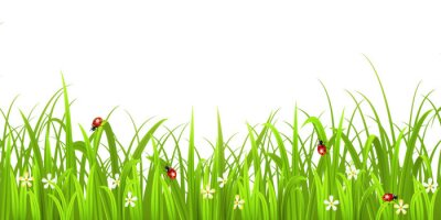 Sticker Gras mit Marienkäfer isoliert auf weißem Hintergrund