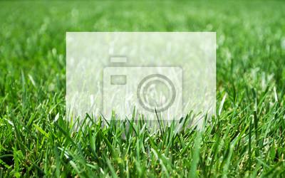 Gras und Plakat