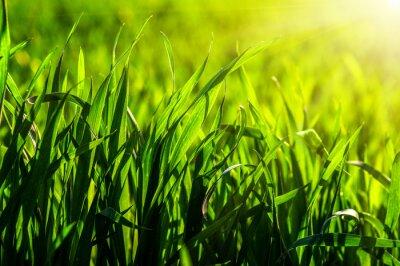 Sticker Gras und Sonnenlicht