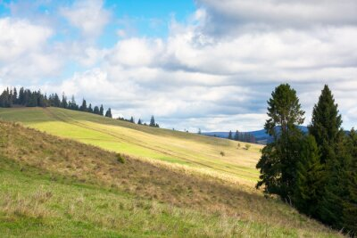 grassy meadow on a sunny day in mountains. beautiful countryside landscape in dappled light. sky with clouds