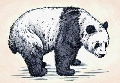 Sticker Gravieren tinte zeichnen panda illustration