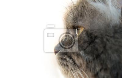 Gray Cat Profil