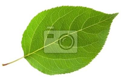 Sticker Green leaf