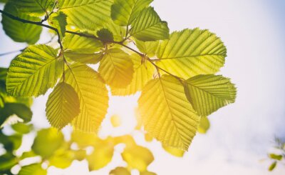 Green leaves in forest background in sunny day