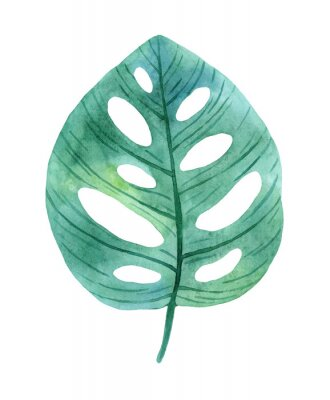 Sticker Green leaves of monstera from humid rainforest.