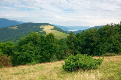 green nature landscape in mountains. beautiful scenery with beech forest on the hill. high peak in the distance. beauty of carpathian ridges. cloudy weather