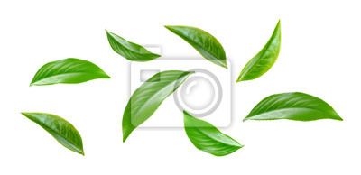 Sticker Green tea leaf collection isolated on white background