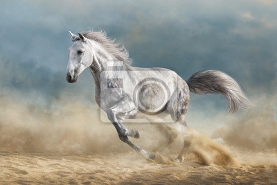 Grey horse galloping on sandy field against dramatic blue sky