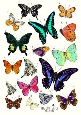 Sticker Große Sammlung von Schmetterlingen, von Hand gezeichnet Satz isolated.Vector illustration