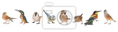 Sticker Group of birds isolated on white background