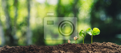 Sticker Growth Trees concept Coffee bean seedlings nature background Beautiful green