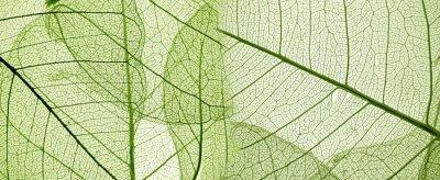 Sticker Grüne Blatt Textur