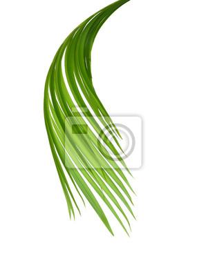 Grüne Blätter der Palme getrennt auf weißem Hintergrund