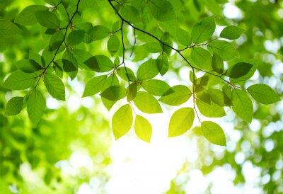 Sticker grüne Blätter Hintergrund
