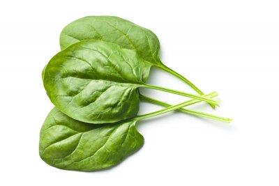 Sticker grüne Blattspinat