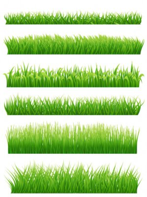 Sticker Grüne Gras Grenzen gesetzt auf weiß. Abbildung