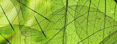 Sticker Grüne Laubbeschaffenheit