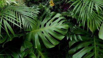 Sticker Grüne tropische Blätter Monstera, Palmen, Farn und Zierpflanzen Hintergrund Hintergrund