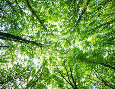 grünen Wald