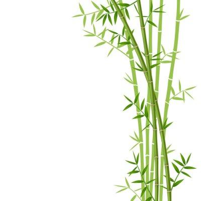 Sticker Grüner Bambus auf weißem Hintergrund, Vektor-Illustration