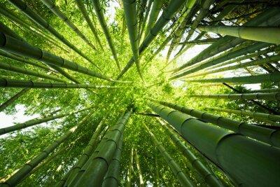 Sticker Grüner Bambus Natur Hintergründe
