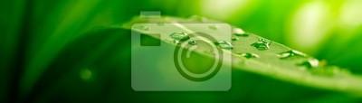 Sticker grünes Blatt, Natur-Hintergrund