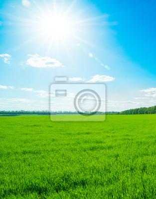 Grünes Feld und blauer Himmel