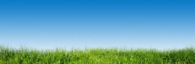 Sticker Grünes Gras auf blauen klaren Himmel, Frühling Natur-Thema. Panorama