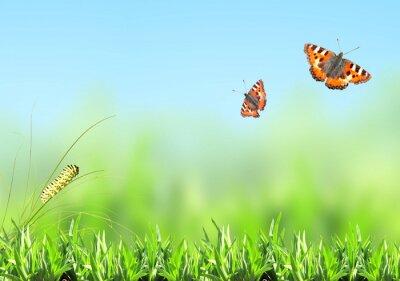 Sticker Grünes Gras, Raupe und Schmetterling