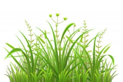 Sticker Grünes Grasmuster auf weißem Hintergrund