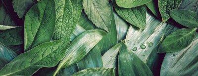Sticker Grünes organisches Hintergrundmakroplan closeu des Blattbeschaffenheitsgrüns
