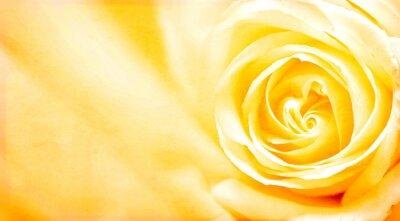 Sticker Grunge Banner mit gelben Rose und Papier Textur