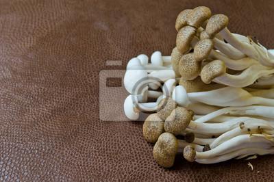Gruppe von Braun Buche Pilz und Weiß Crab Pilz auf braun