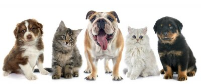 Sticker Gruppe von Haustieren