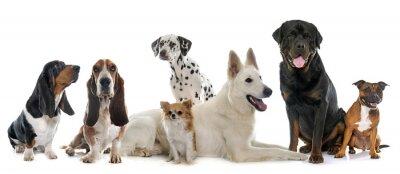 Sticker Gruppe von Hunden