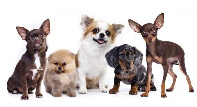 Sticker Gruppe von kleinen dekorativen Hund Begleiter
