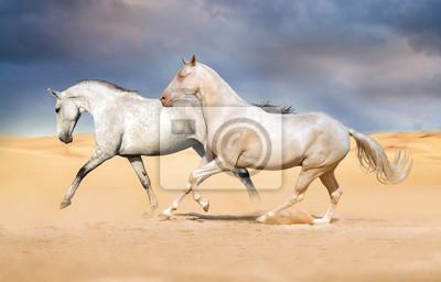 Gruppe von Pferd auf Wüste laufen