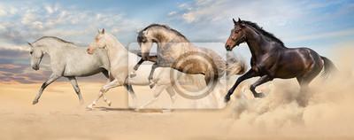 Gruppe von Pferd laufen Galopp