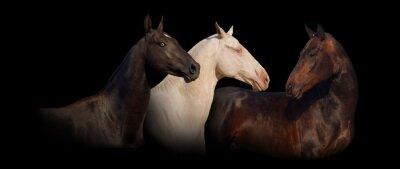 Gruppenbild der Achal-Tekkiner Pferde-Banner