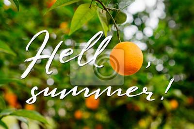 Hallo, Sommer-Design-Konzept. Orange auf Baum und Hand gezeichnetem hallo, Sommertext.