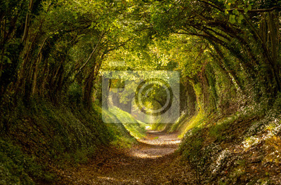 Sticker Halnaker tree tunnel in West Sussex UK with sunlight shining in. This is an ancient road which follows the route of Stane Street, the old London to Chichester road.