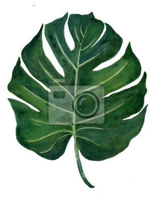 Hand drawn watercolor tropical plants set exotic leaves hand draw