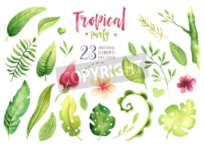 Hand drawn watercolor tropical plants set . Exotic palm leaves, jungle tree, brazil tropic botany elements and flowers. Perfect for fabric design. Aloha set